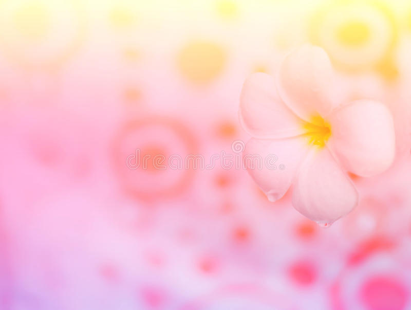 Bloem zoete kleur stock afbeeldingen