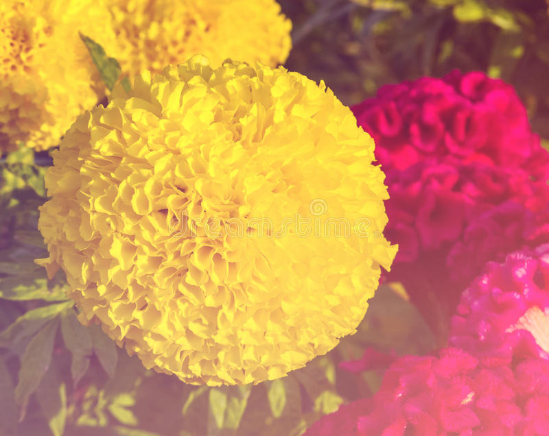 Bloem zoete kleur royalty-vrije stock fotografie