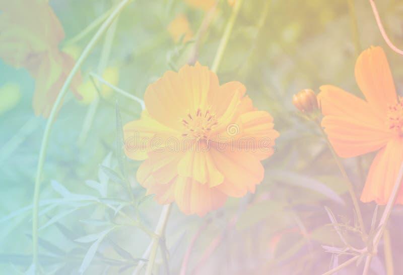 Bloem zoete kleur stock afbeelding