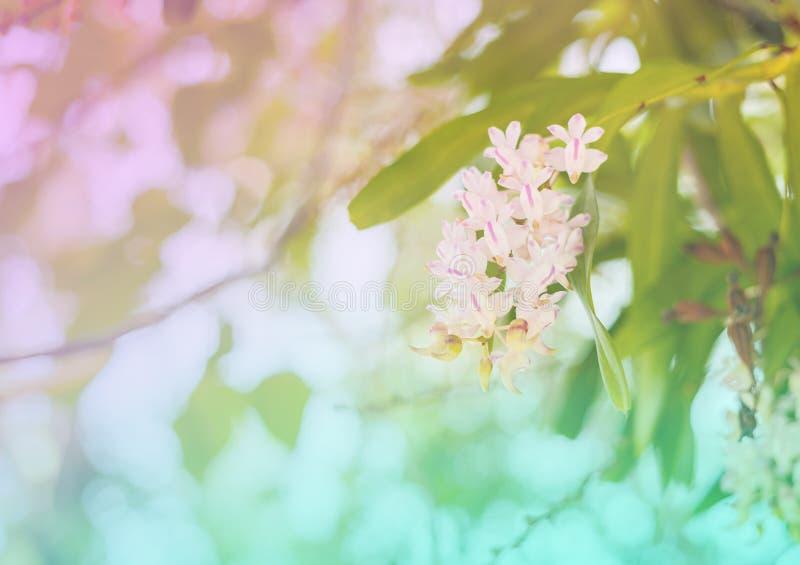 Bloem zoete kleur stock fotografie