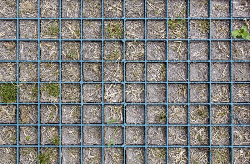 Bloembed met blauwe geruite verdelingen met droog en groen gras in grijze grond Hoogste mening Ruwe Oppervlaktetextuur stock foto's