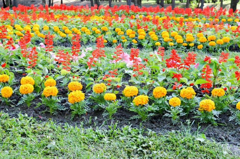 Bloembed met multicoloured bloemen: goudsbloem en Salvia royalty-vrije stock foto's