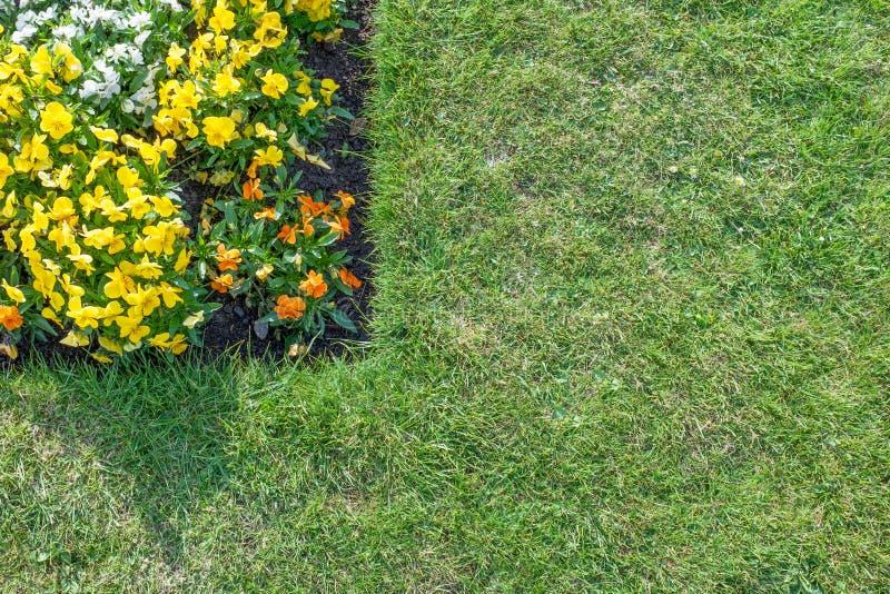 Bloembed met oranje, gele & witte die bloemen door gre worden omringd stock afbeeldingen