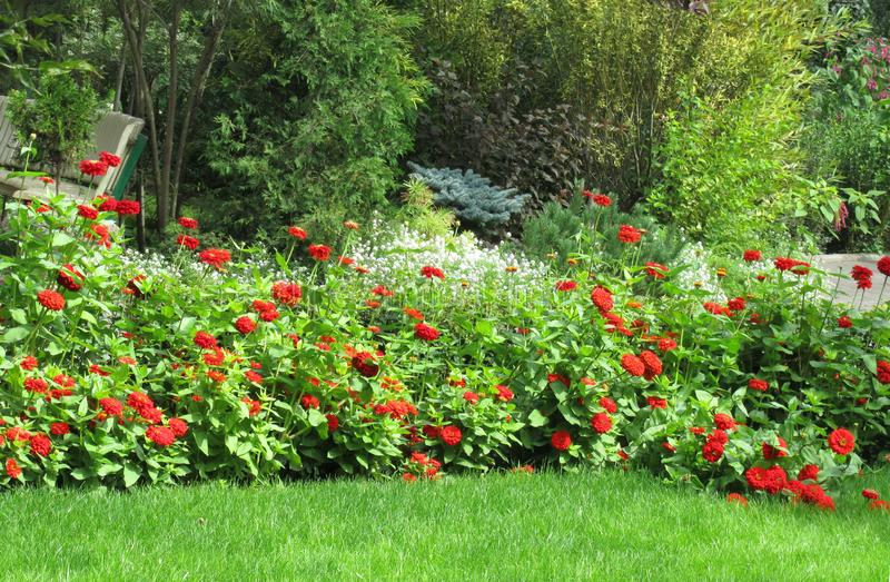 Bloembed met rode dahlia's, witte bloemen stock fotografie