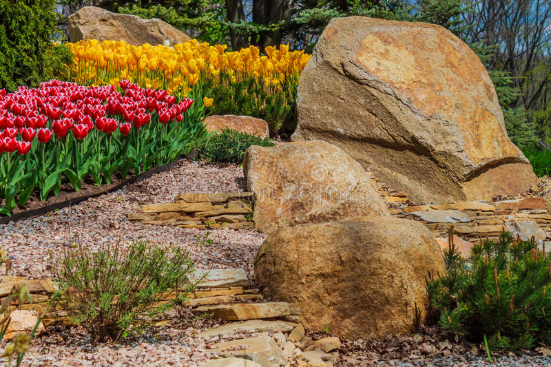 Bloembed met tulpen in de tuin stock fotografie