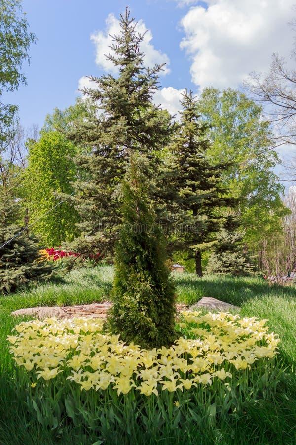 Bloembed met tulpen in de tuin royalty-vrije stock foto
