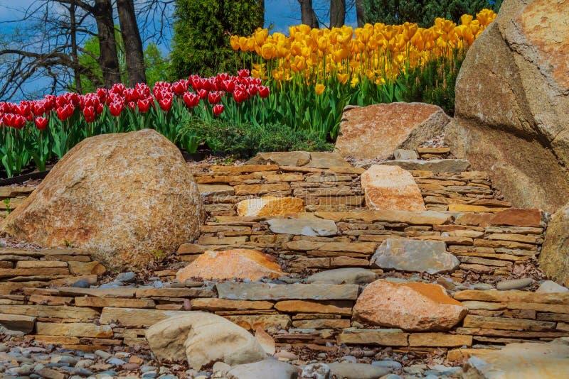 Bloembed met tulpen in het park royalty-vrije stock fotografie