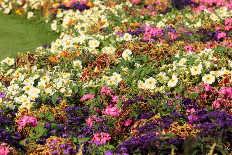 Bloembedhoogtepunt van bloemen in de tuin van Luxemburg, Parijs stock afbeelding