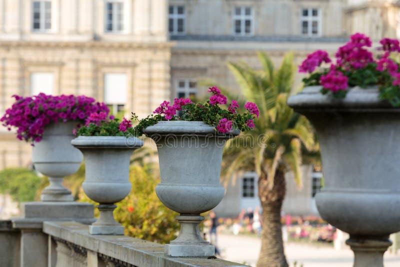 Bloembedhoogtepunt van bloemen in de tuin van Luxemburg, Parijs royalty-vrije stock afbeeldingen