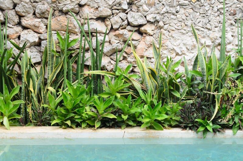 Bloembedhoogtepunt van diverse groene tropische installaties naast de pool royalty-vrije stock foto's