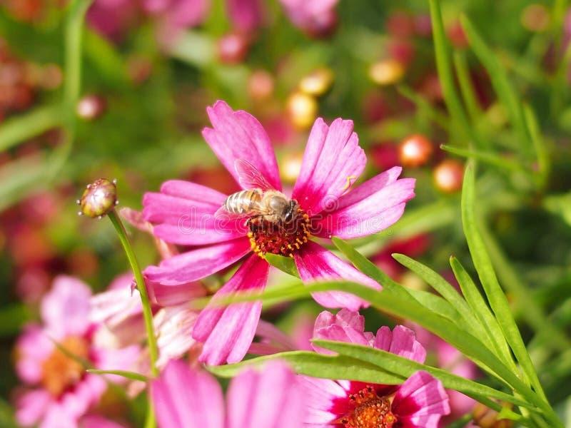 bloembij stock afbeeldingen