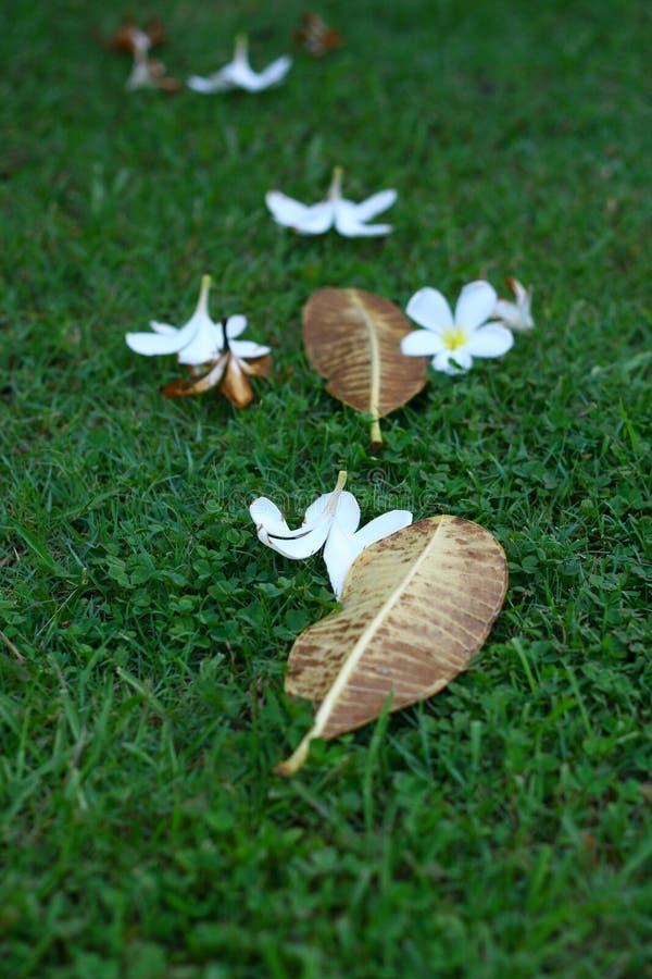 Bloemblaadje en blad in het gras royalty-vrije stock afbeeldingen