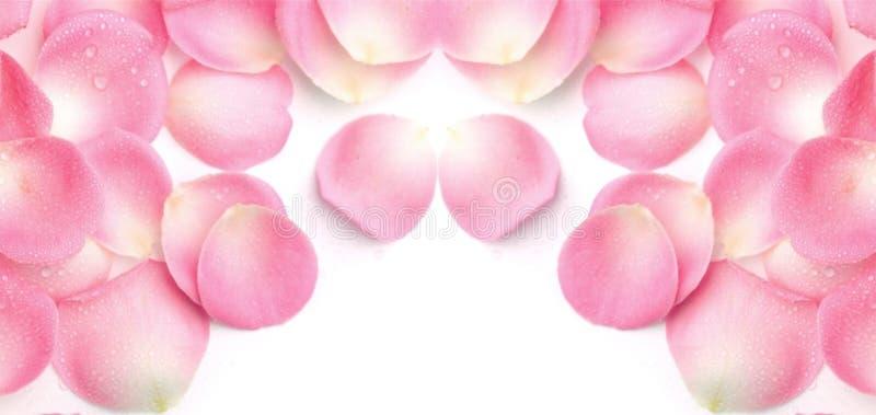 Bloemblaadje Rose Background stock fotografie