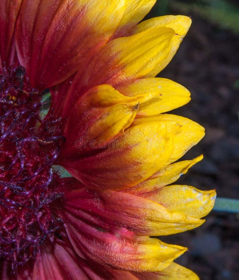 Download Bloemblaadjes stock afbeelding. Afbeelding bestaande uit tuin - 54092353
