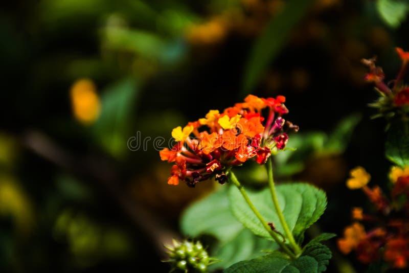 Bloemblaadjes in de tuin stock afbeelding