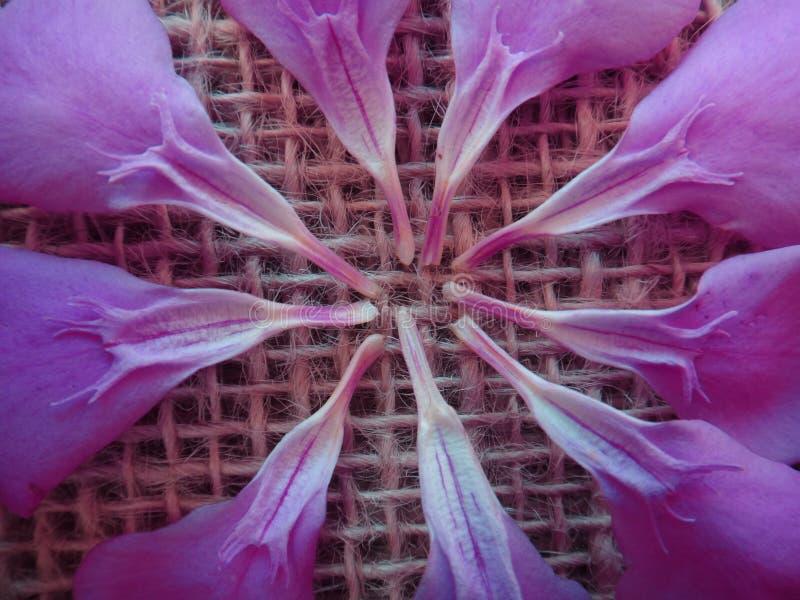Bloemblaadjes - oleander - bloemenontwerp royalty-vrije stock afbeelding