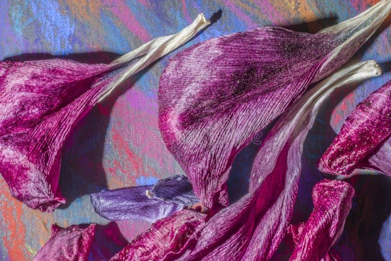 Bloemblaadjes op palet stock afbeeldingen