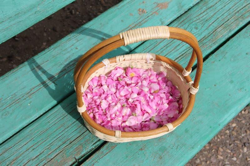Bloemblaadjes Siberische nam wild installaties in een rieten mand toe stock fotografie