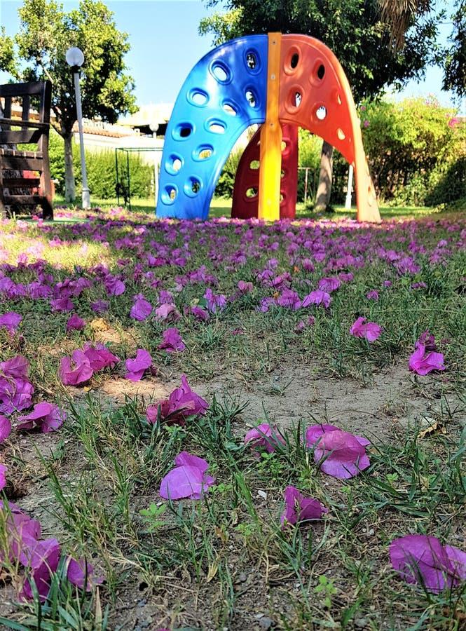 Bloemblaadjes van bougainvillea op speelplaats in familiehotel in Kemer, Mediterrane kust, Turkije stock afbeelding