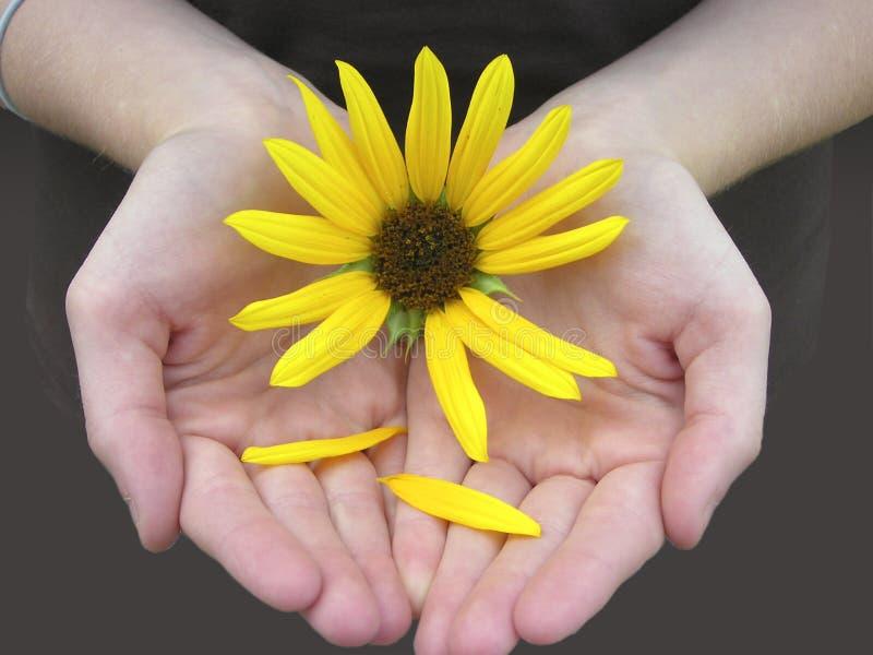 Bloemblaadjes van Liefde stock afbeeldingen