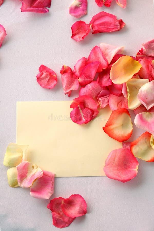 Bloemblaadjes van rozen royalty-vrije stock afbeelding