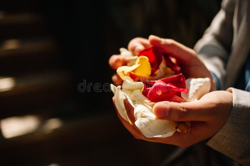 Bloemblaadjes van witte en rode rozen in mannelijke handen Huwelijkstraditie om de jonggehuwden te bestrooien stock afbeeldingen