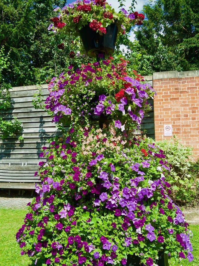 Bloembloei in de tuin royalty-vrije stock afbeelding