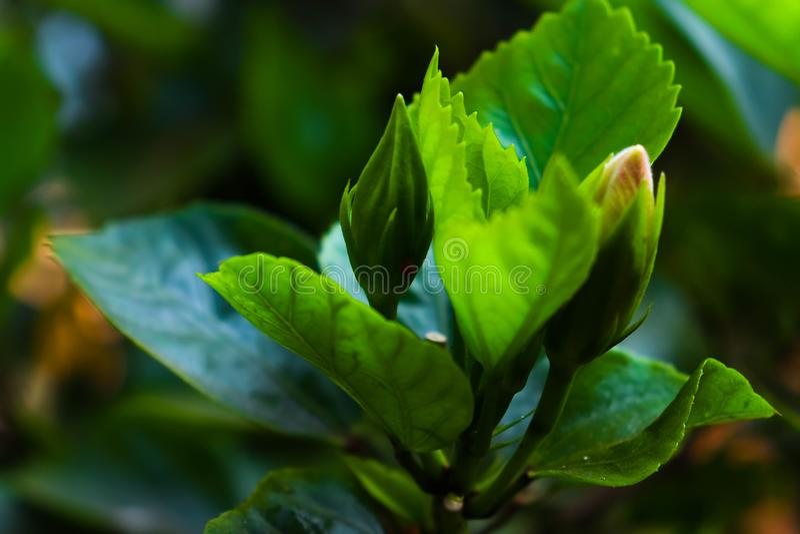 Bloembloei tussen de bladeren royalty-vrije stock afbeeldingen
