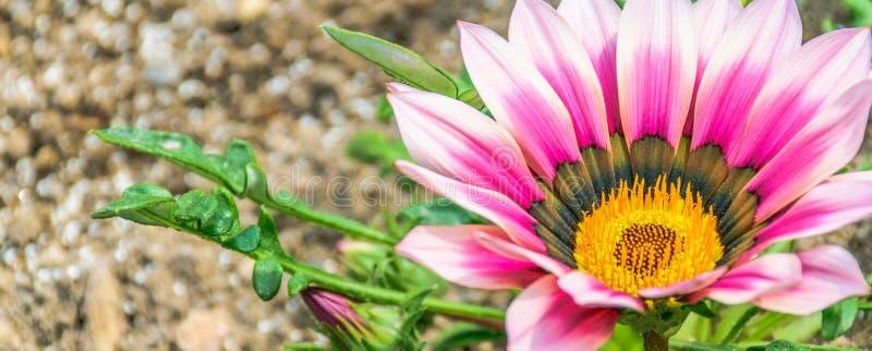 bloembloesem op gebied im uitstekende toonachtergrond stock afbeeldingen