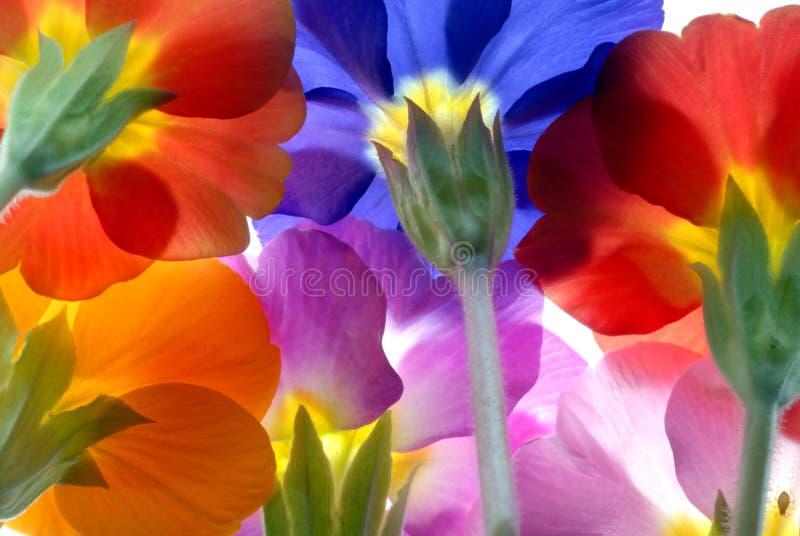 Download Bloemen stock afbeelding. Afbeelding bestaande uit spring - 1780167