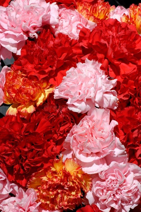 Bloemen 26 stock afbeelding