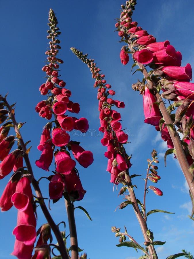 Bloemen stock foto's