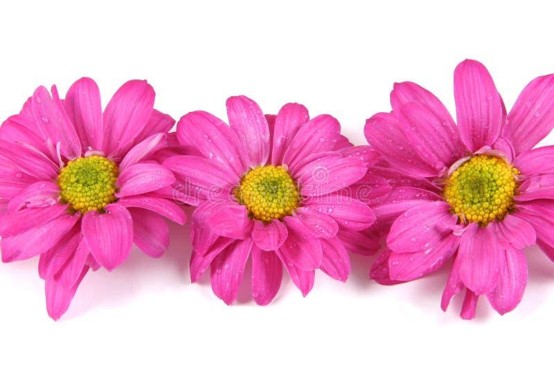 Bloemen. stock foto