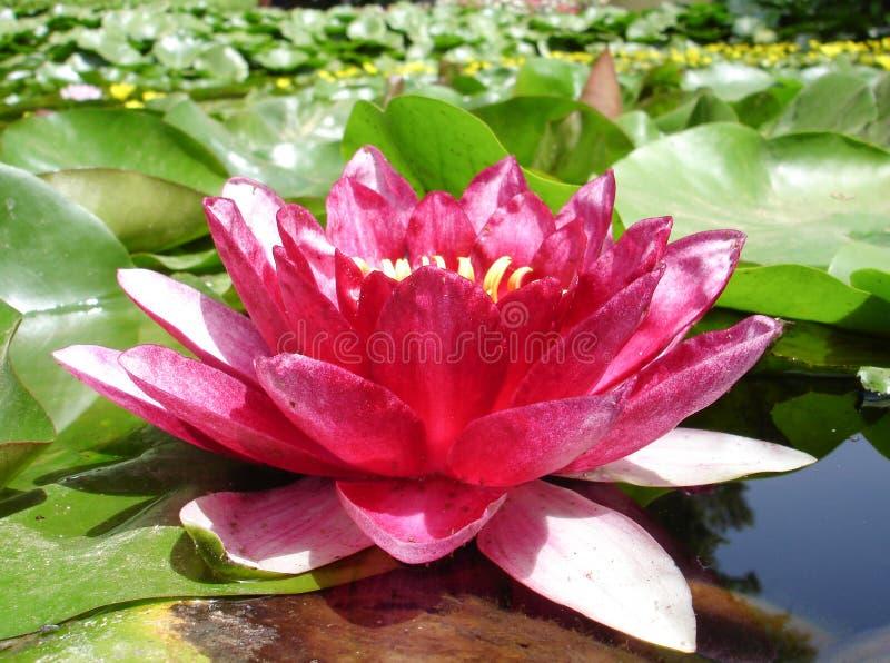 Bloemen #1 royalty-vrije stock foto's