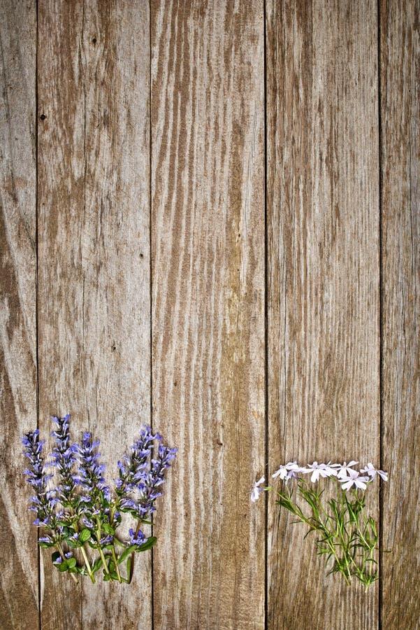 Download Bloemen stock afbeelding. Afbeelding bestaande uit patroon - 54087907