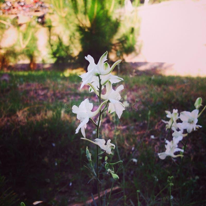 Bloemen royalty-vrije stock foto
