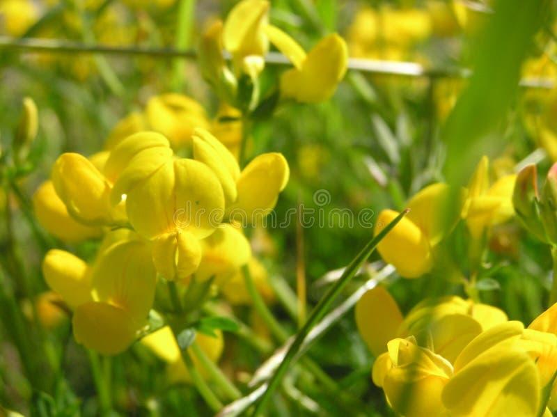 Bloemen royalty-vrije stock foto's