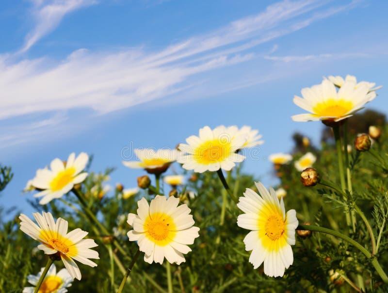 Bloemen in aard royalty-vrije stock afbeeldingen