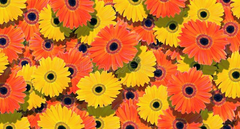 Bloemen achtergrond de heldere oranje achtergrond van de gerberastextuur Natuurlijke oranje achtergrond stock fotografie