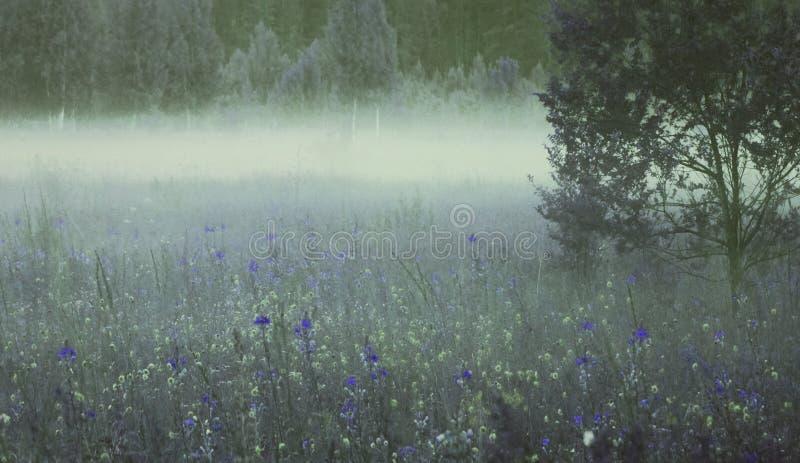 Bloemen achtergrond Heel wat blauwe en gele bloemen bloeien in de zomer in een open plek in de ochtendmist stock foto
