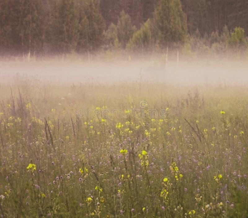Bloemen achtergrond Heel wat blauwe en gele bloemen bloeien in de zomer in een open plek in de ochtendmist royalty-vrije stock afbeeldingen
