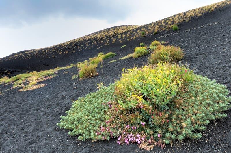 Bloemen bij de voet van de vulkaan stock foto