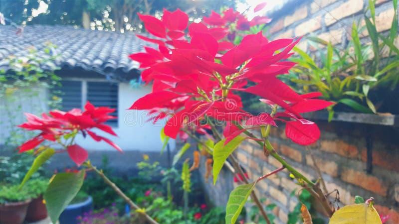Bloemen bij mijn tuin royalty-vrije stock afbeelding