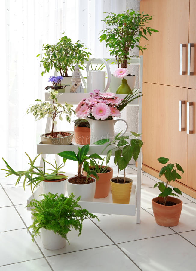 Bloemen in binnenland stock fotografie