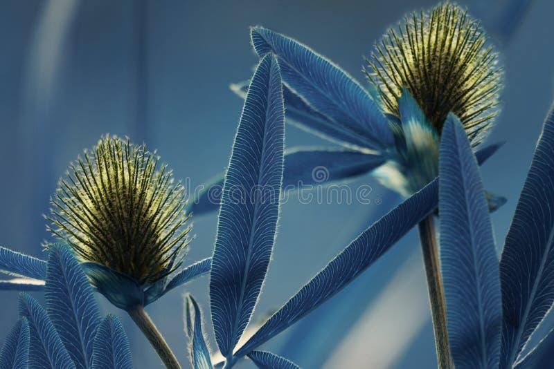 Bloemen Blauwe Achtergrond Wildflowers gele klaver op een bokehachtergrond Close-up Zachte nadruk stock fotografie