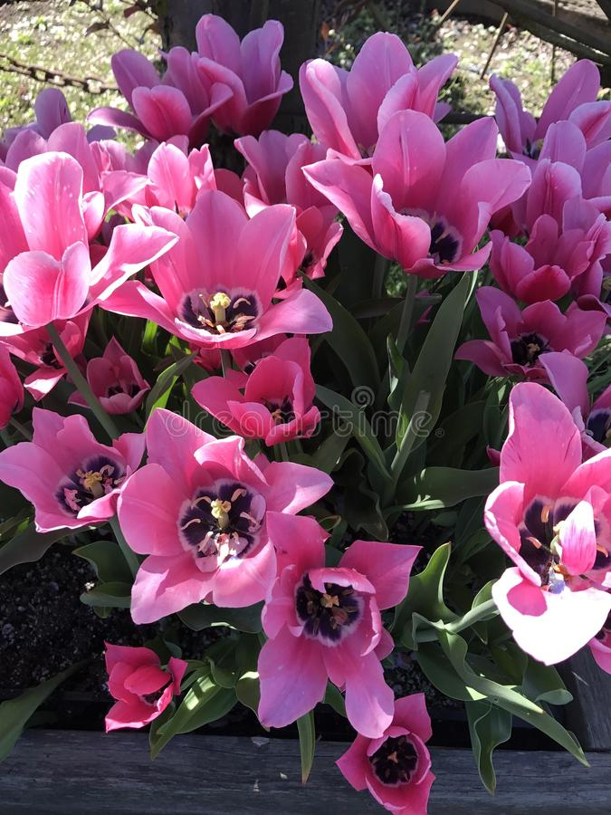Bloemen in Bloei royalty-vrije stock foto
