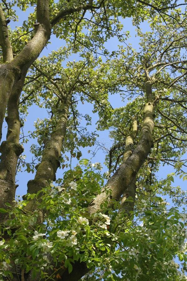 Download Bloemen, bomen & hemel stock afbeelding. Afbeelding bestaande uit bloemen - 107700269