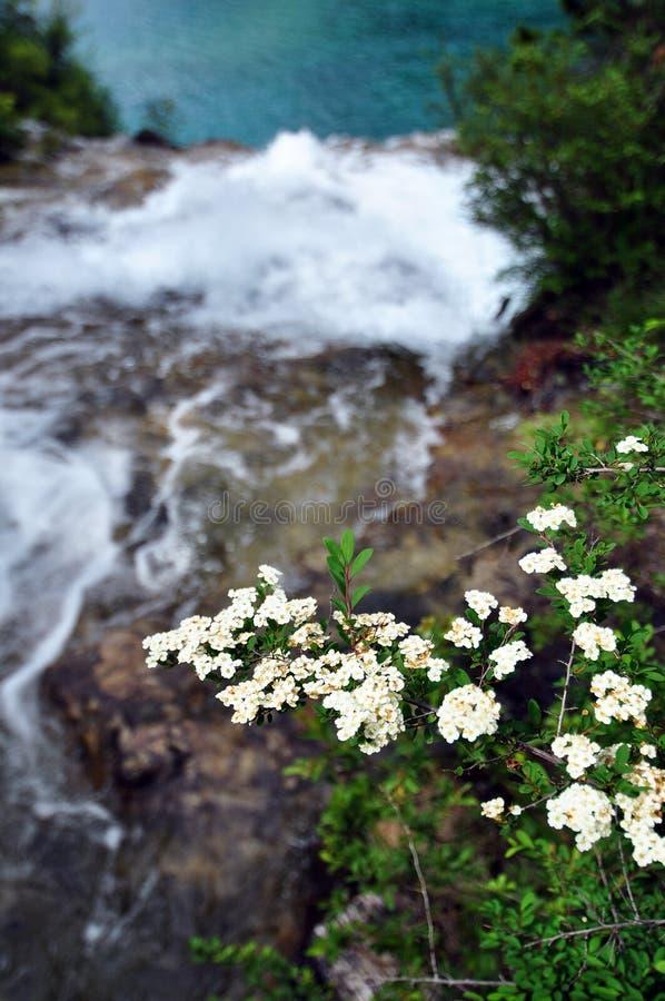 Bloemen boven de vallei op de bergen in Jiuzhaigou-Valleischoonheidsvlekje stock fotografie