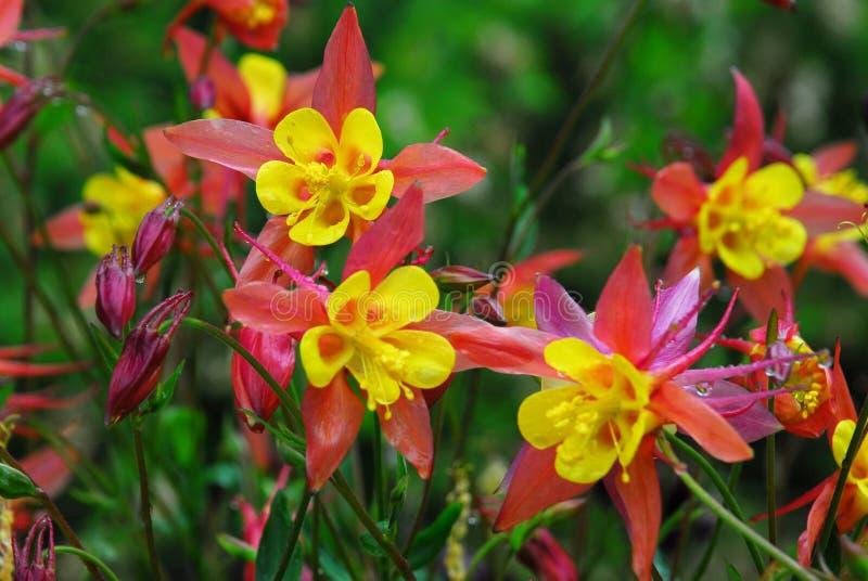 Bloemen in butcharttuinen stock afbeelding