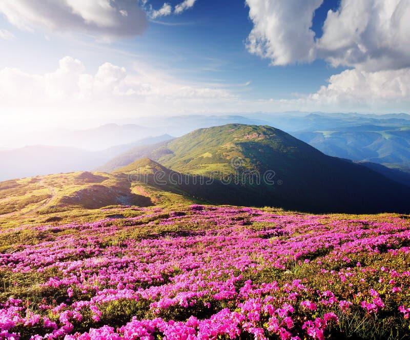 Bloemen in de bergen stock foto